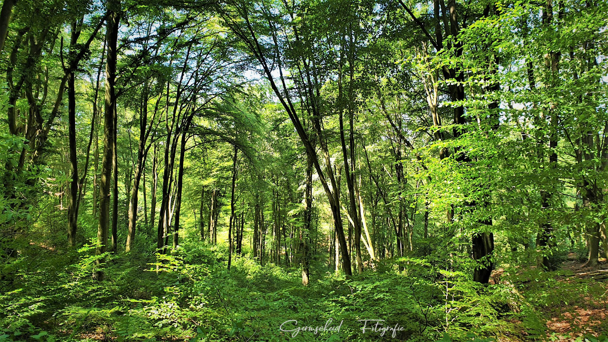 Wald im Bergischen scaled
