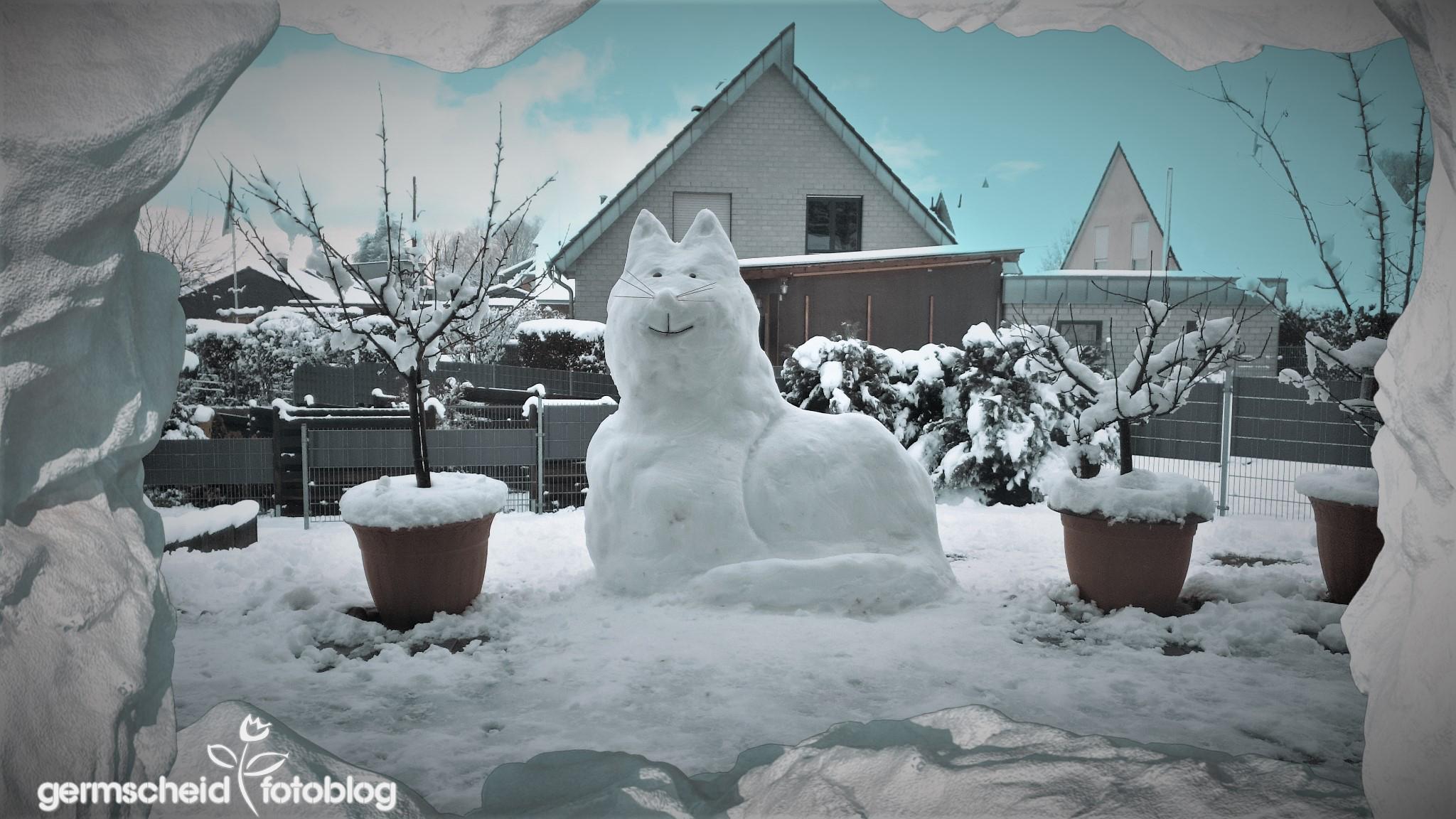 Schnee Katze