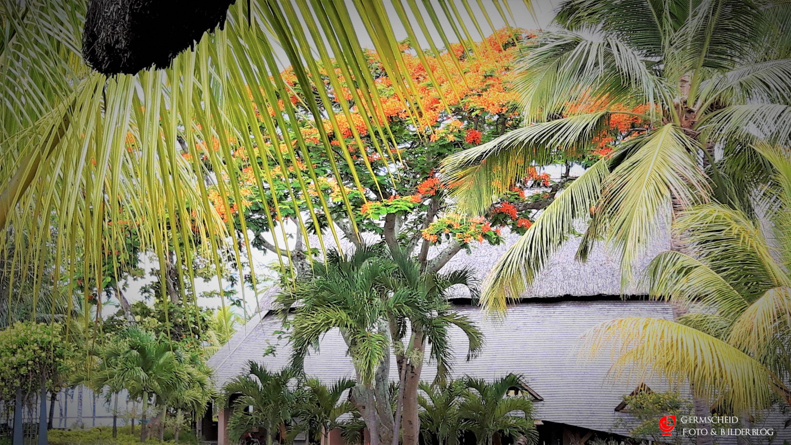 Mauritius scaled